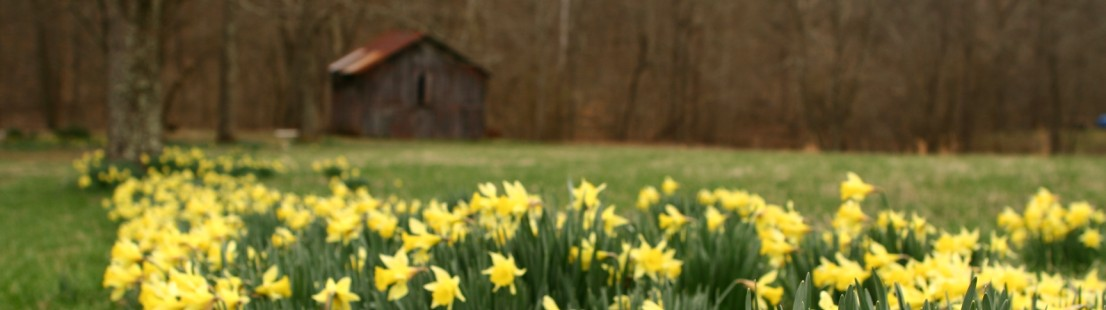 Barn-wildflowers-spring-daffodil_-_West_Virginia_-_ForestWander